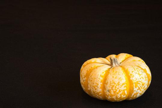 Orange and white pumpkin like gourd on a black background.