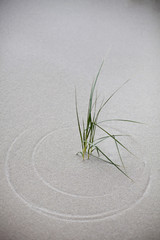 Dune grass has drawn circles in the sand