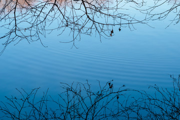 Tree limbs reflecting surface of blue pond