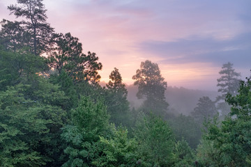 Trees shrouded in fog at sunrise on a summer morning in Talladega National Forest in Alabama, USA