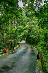 Asphalt country road