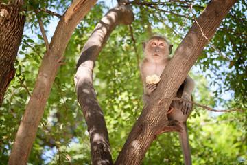 Monkey sitting on a tree happily