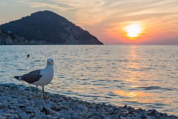 Möwe am Strand von Elba zum Sonnenuntergang