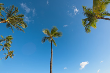 Coconut trees and the blue sky