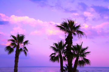 Palm trees against a purple sunset sky. Tropical evening landscape. Beautiful nature.