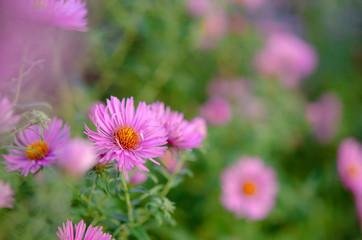 Bouquet of pink garden flowers
