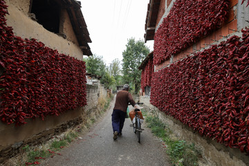 A man pushes a bicycle as bunches of peppers hang on  walls of houses to dry in the village of Donja Lakosnica