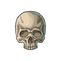 Skull human. Black vintage vector illustration.