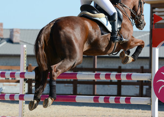 Red sport horse jumping through hurdle. Horse show jumping in details.
