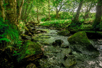 A small flowing river and sun rays in the forest near Loch Tay lake, central Scotland