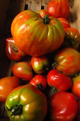 ripe beefsteak tomatoes assorted sizes in wooden crate at market