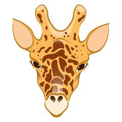 Giraffe in cartoon style
