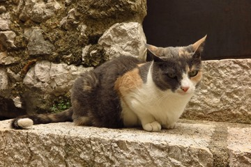 calico cat on stone steps