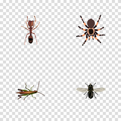 Realistic Locust, Emmet, Midge And Other Vector Elements. Set Of Insect Realistic Symbols Also Includes Ant, Spider, Tarantula Objects.