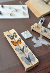 Tools for Insect Collecting