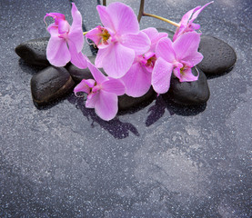 Spa stone with orchid flowers.