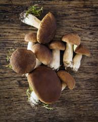 Pilze, Steinpilz, essbar, essen, marone, pfifferling, pilze, pilze sammeln, pilze suchen, röhrlinge, sammeln, schwammpilze, steinpilz
