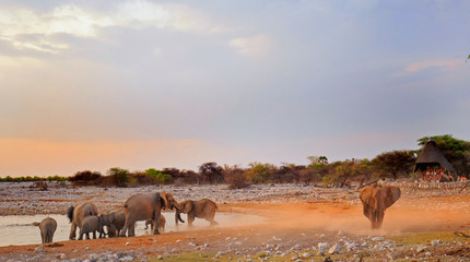 Okaukeujo waterhole in Etosha at dusk with elephants coming to take a drink