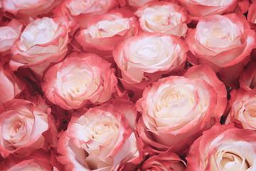 Beautiful many roses flowers background for wedding scene vintage style tone