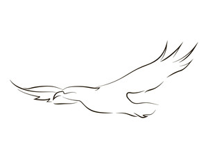 Flying black line eagle on white background. Hand drawing vector graphic.