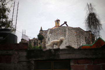 A church damaged in an earthquake is seen as a dog stands on the roof of a house, in Tepalcingo