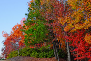 Fall colors in trees and plants shortly before sunset on a hillside at Barber Motorsports Park in Birmingham, Alabama, USA
