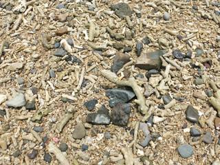 Strand aus Muschelsand und Steinen