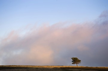 Solitary Tree on the horizon, Highlands, Scotland, United Kingdom, Europe