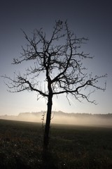 Backlit tree in the morning