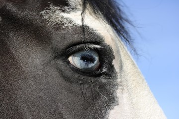 Eye of a mare