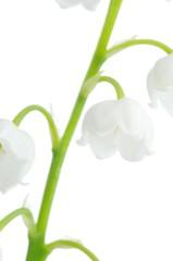 Poster de jardin Muguet de mai Lily of the Valley (Convallaria majalis)