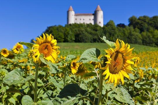 Chateau de Champvent, Canton of Vaud, Switzerland, Europe