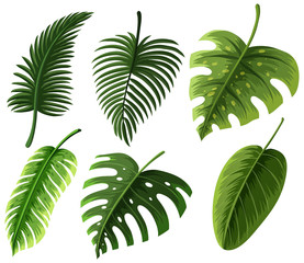 Different kinds of leaves