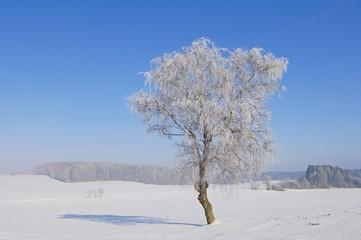 Wintery landscape near Westerheim, Baden-Wuerttemberg, Germany, Europe