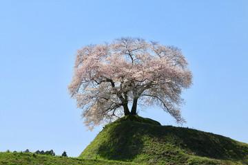 平堂壇の桜(福島県・三春町)