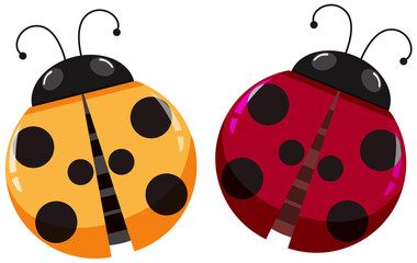 Yellow and red ladybugs on white background