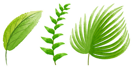 Three types of green leaves