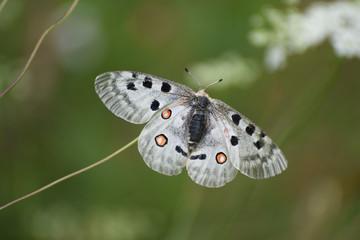 farfalla fotografia macro volare ali farfalla natura naturale insetto