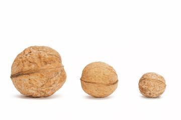 Different sizes walnuts