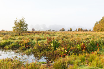 Pond at meadow on wetland