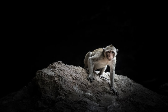 Monkey macaque sitting on the rock in the cave