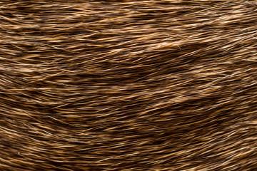 Close up of deer hair