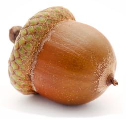 Closeup of acorn