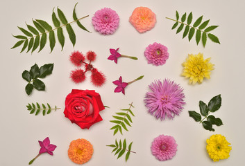 Flowers of roses, dahlias, tobacco, marigolds and leaves host, astilbe and Ricinus communis isolated on white background. Flora composition and collection. Nature and plants. Flat lay, top view