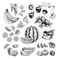 Hand drawn set of fruits. Vector sketch