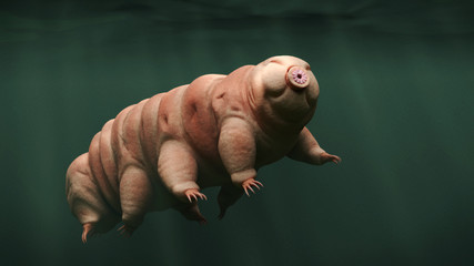 tardigrade, swimming water bear, 3d illustration