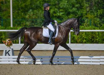 Young elegant rider woman and black horse, dressage test on equestrian competition. Advanced Dressage test. Horse with girl at dressage equestrian sports competitions. Details of equestrian equipment.