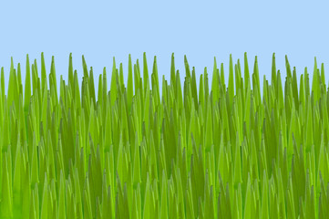 Surreal cartoon grass and sky landscape