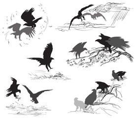 Set of vector scenes of eagle life