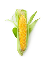 Ripe corn cob on white background